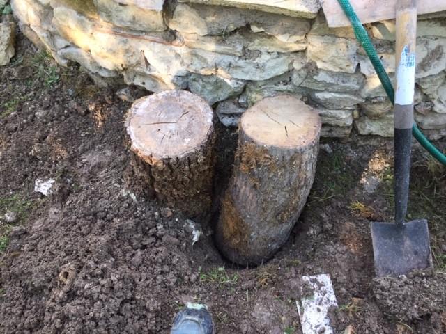 Tree stump - /m/083vt